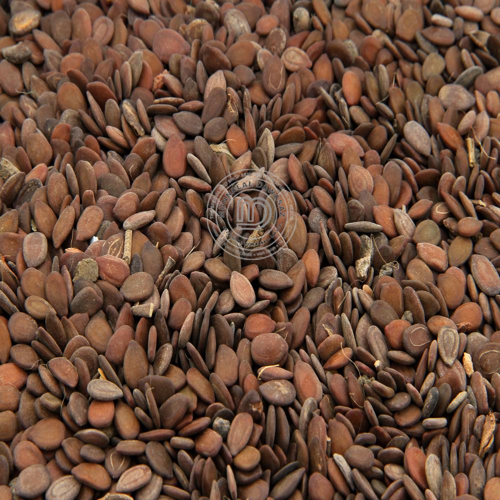 Siris Seeds